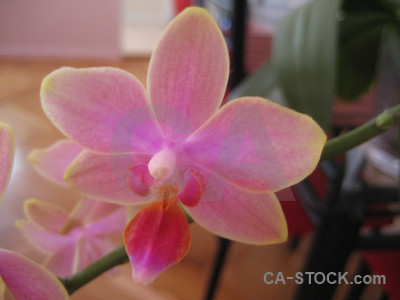 Plant flower orchid red purple.