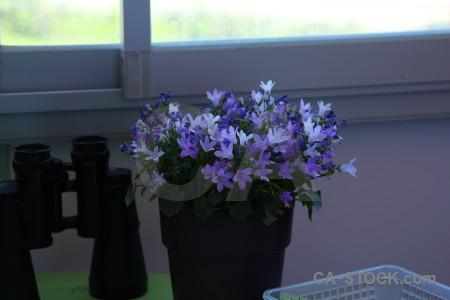 Plant flower pot.