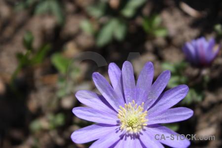 Plant flower purple green.