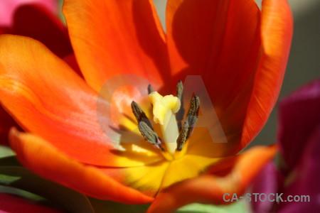 Plant flower red orange yellow.