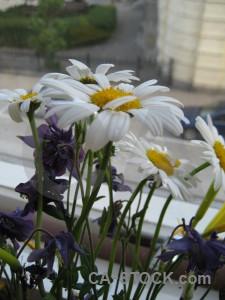 Plant green flower.