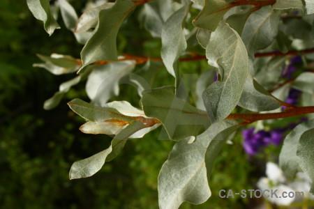 Plant green leaf.