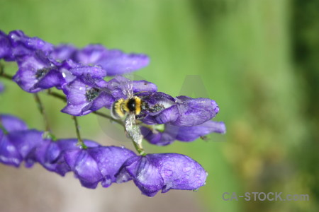 Plant insect animal flower bee.