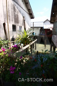 Plant island asia village southeast.