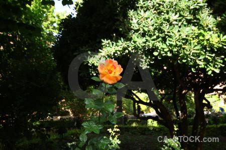 Plant la alhambra de granada palace flower green.