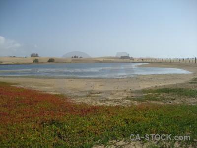 Plant landscape coast beach water.