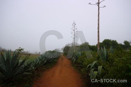 Plant laos tree asia sky.