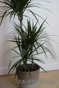 Plant leaf.