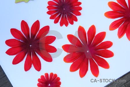 Plant leaf flower pink red.