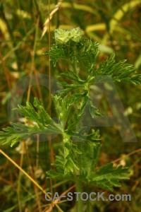 Plant leaf green.