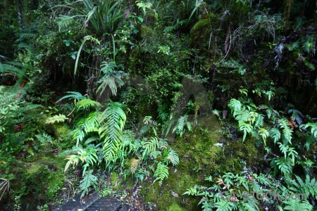 Plant moss forest furn south island.
