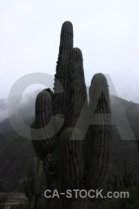 Plant mountain salta tour cactus argentina.