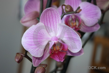 Plant orchid flower purple.