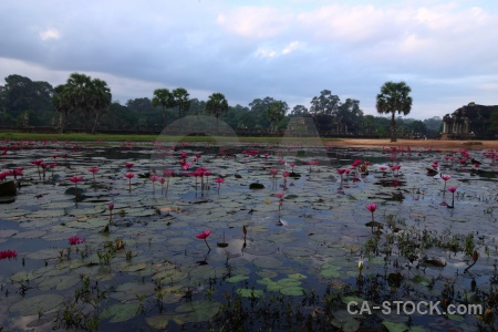 Plant pool sky buddhism buddhist.