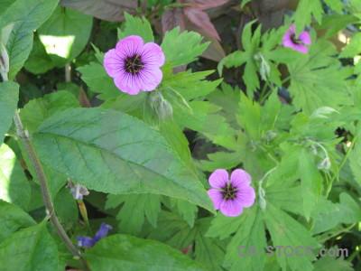 Plant purple green flower.