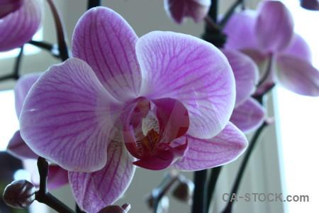 Plant purple orchid flower.