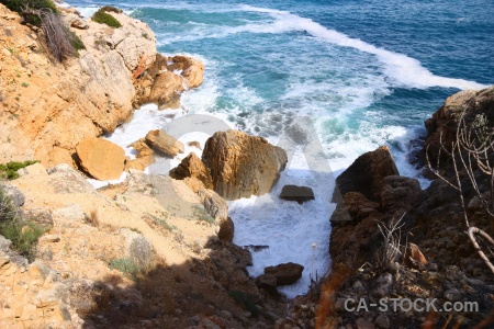 Plant rock europe sea spain.