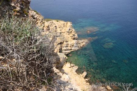 Plant sea cliff nature rock.