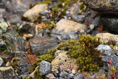 Plant stone moss rock south island.