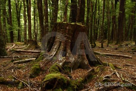 Plant tree forest trek stump.