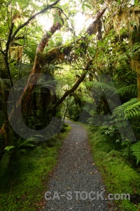 Plant tree rainforest fern path.