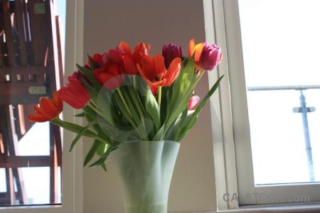 Plant tulip vase flower bouquet.