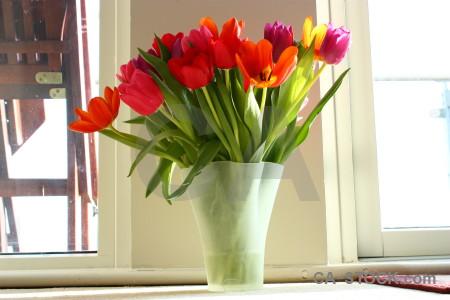 Plant vase flower tulip bouquet.