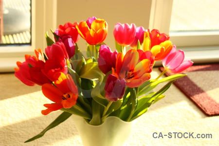 Plant vase tulip flower bouquet.