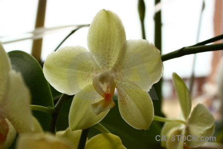 Plant white orchid flower.