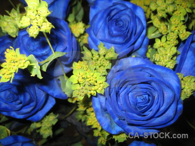 Plant yellow bouquet rose blue.