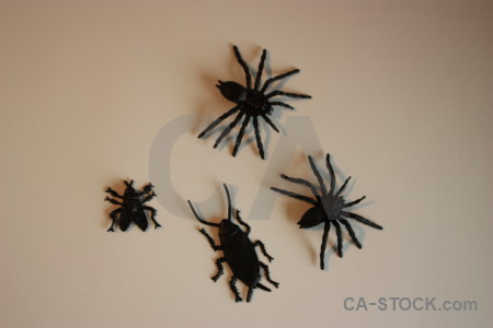 Plastic insect animal spider.