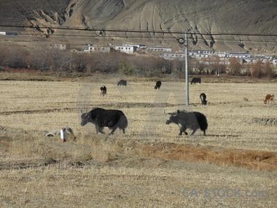 Plateau china asia altitude arid.