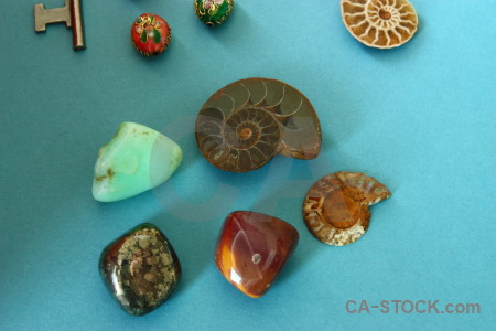 Polished ammonite object cyan stone.