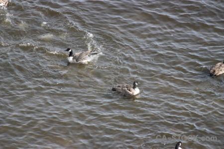 Pond animal aquatic bird water.