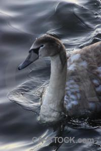 Pond animal aquatic water bird.