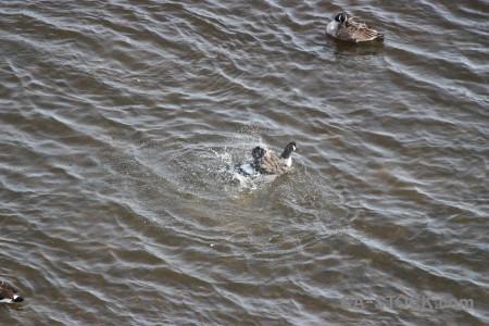 Pond animal bird water aquatic.