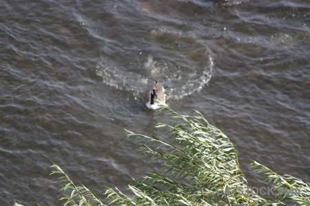 Pond animal water aquatic bird.