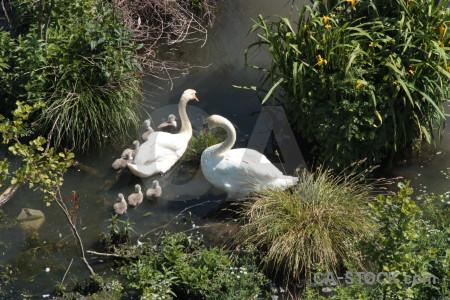 Pond aquatic animal bird water.