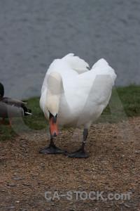 Pond aquatic animal water bird.