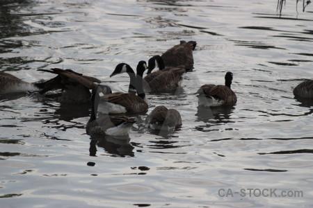 Pond aquatic bird animal water.