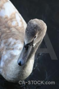 Pond aquatic water animal bird.