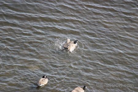 Pond bird animal aquatic water.