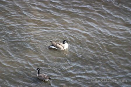 Pond bird animal water aquatic.