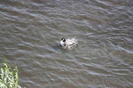 Pond bird aquatic animal water.
