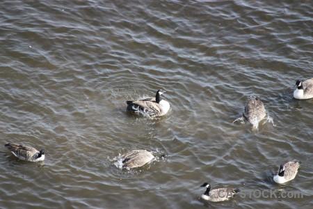Pond bird water animal aquatic.