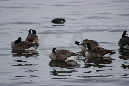 Pond bird water aquatic animal.
