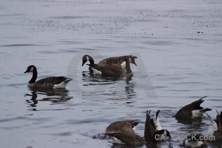 Pond water animal aquatic bird.
