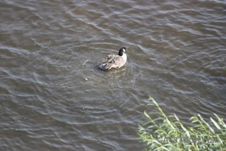 Pond water animal bird aquatic.