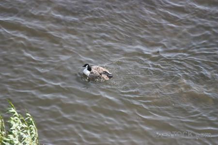 Pond water aquatic animal bird.
