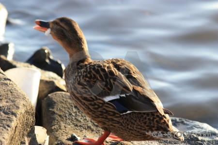 Pond water aquatic bird animal.